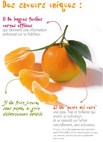 clementine-de-corse